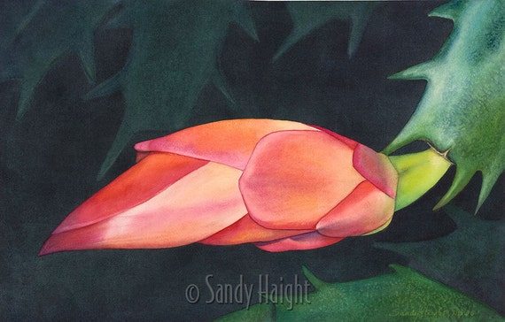 Matted Giclee Print of watercolor painting, Christmas cactus, bud, plant, house plant, bloom, flower, unframed, wall art, home decor, gift