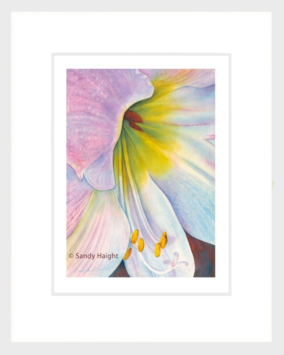 Framed giclee print of watercolor painting, art, white flower, amaryllis, close up, holiday bloom, decor, interior design, wall art, floral