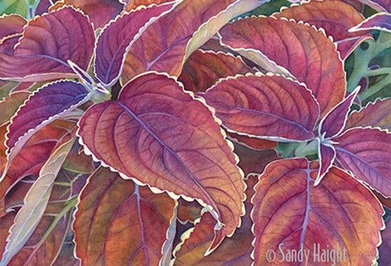Giclee of a watercolor painting, Coleus, leaves, plant, garden, gardener, gift, purple, ochre, magenta, wall art, home decor, unframed