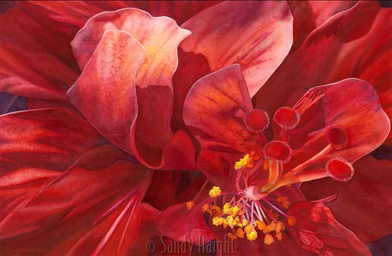 Original watercolor painting, framed, double hibiscus, tropical, flower, floral, red, bloom, petals, close up, wall art, home decor, Kauai