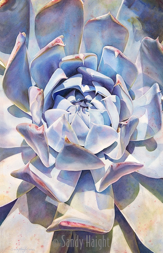 Original framed watercolor painting, succulent, art, flower, plant, bloom, blue, neutral color, wall art, interior design, decor, garden, 2D
