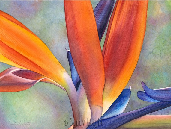 Framed Giclee of watercolor painting-Bird of Paradise, flower, tropical, garden, botanical, garden, gift, wall art, home, archival print, 2D