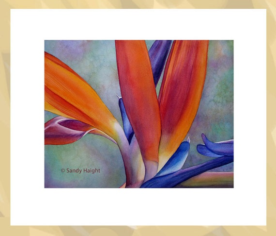 Original Framed Watercolor, Bird of Paradise, painting, flower, floral, tropical, garden, horticulture, gift, gardener, wall art, home decor