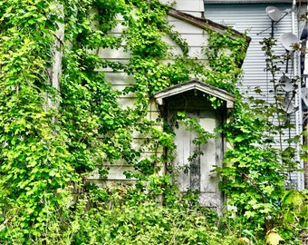 Abandoned House, Overgrown Vines, Abandoned Places Photography, Urban Exploration, Urbex Photography,