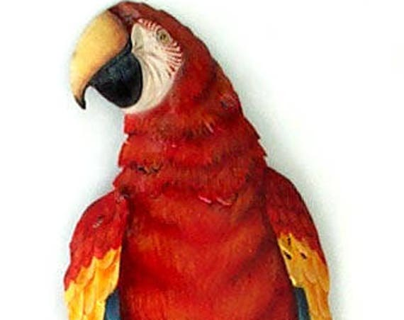 "SCARLET MACAW Parrot, Parrot Art, Tropical Decor, Painted Metal Wall Hanging, Tropical Wall Art, Garden Decor, Garden Art, 8 x 26""  K7040"