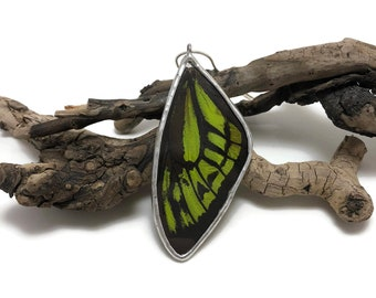 Real Butterfly pendant, real butterfly wing, butterfly jewelry, glass necklace, butterfly necklace, insect jewelry, insect Pendant, glass