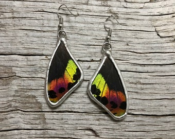 Real Butterfly earrings, butterfly jewelry, insect earrings, glass, Sunset moth Earrings, butterfly jewelry, butterfly wing, butterfly wing