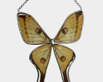 Butterfly art, sun catcher, home decor, glass art, Stained glass sun catcher, glass sun catcher, window art, real butterfly, unique gifts