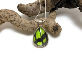 Butterfly wing jewelry, glass jewelry, Real Butterfly wings, butterfly wing Necklace, insect jewelry, real butterfly pendant, glass necklace
