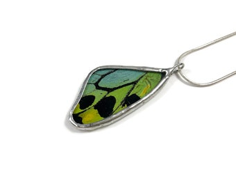 real butterfly jewelry, real butterfly wing, real butterfly Necklace, insect jewelry, glass pendant, insect jewelry, butterfly pendant
