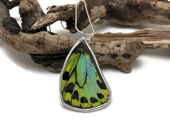 Real Butterfly jewelry, real butterfly wing, butterfly necklace, butterfly pendant, insect necklace, glass pendant, insect Pendant, RARE