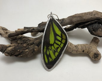Butterfly pendant, butterfly wing Necklace, butterfly jewelry, glass necklace, butterfly, handmade real butterfly jewelry, insect Pendant