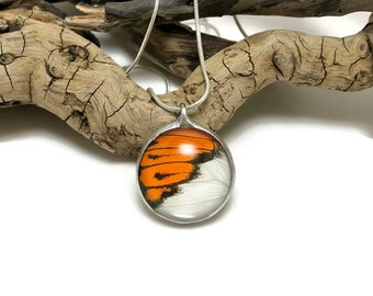 Real Butterfly jewelry, butterfly Wing Necklace, handmade, Colotis eventhe, butterfly Pendant, butterfly wing pendant, butterfly necklace