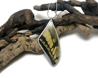 Butterfly jewerly, Butterfly pendant, real butterfly, glass, insect jewelry, Real butterfly jewelry, Real Butterfly Wing Necklace, butterfly