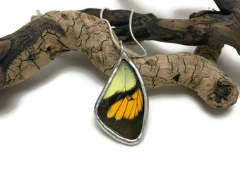 Real Butterfly jewelry, Real Butterfly wing, real butterly Necklace, real butterfly pendant, insect pendant, Insect necklace, glass Pendant