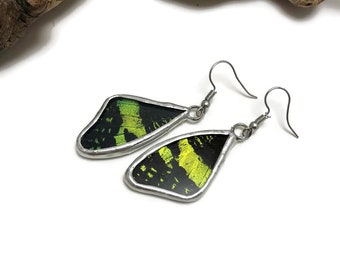 Real butterfly Jewelry, Butterfly earrings, glass earrings, insect jewelry, real butterfly wing, Insect Earrings, Urania riphaeus, glass