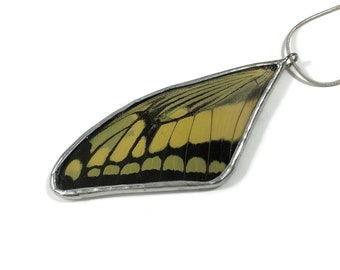 Real butterfly necklace, real butterfly jewelry, real butterfly wing, real butterfly pendant, Insect Necklace, glass pendant, insect jewelry