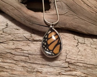 Real Butterfly pendant, insect necklace, real butterfly jewelry, Real Butterfly Wing, monarch Pendant, insect jewelry, glass jewelry, glass