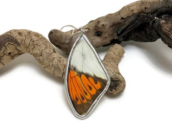 Real Butterfly jewelry, butterfly pendant, butterfly Necklace, real butterfly wing, insect pendant, insect jewelry, glass pendant