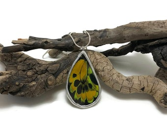 real butterfly jewelry, glass jewelry, real butterfly necklace, real butterfly pendant, Real Butterfly Wing, insect pendant, Insect jewelry