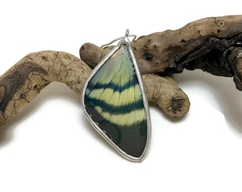 Real Butterfly wing jewelry, handmade butterfly pendant, real butterfly necklace, Real moth jewelry, real moth wing Necklace, moth Pendant