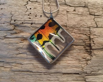 Real Butterfly jewelry, real butterfly Wing, insect jewelry, real butterfly Necklace, Butterfly Pendant, insect pendant, glass necklace