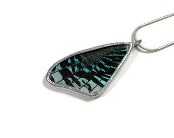 Real Butterfly Wing, real butterfly necklace, insect pendant, butterfly Pendant, real butterfly jewelry, insect jewelry, insect necklace