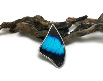 Real Butterfly jewelry, real butterfly pendant, real butterfly necklace, real butterfly Wing, insect jewelry, insect Necklace, butterfly