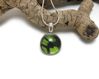 Butterfly jewelry, glass jewelry, Real Butterfly pendant, butterfly wing Necklace, insect jewelry, real butterfly pendant, glass jewelry