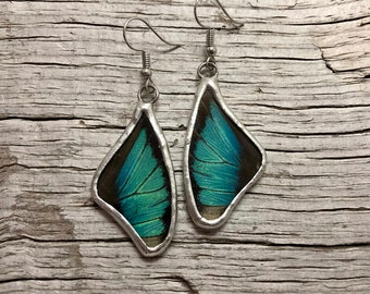 Real Butterfly earrings, glass earrings, dangle earrings, insect earrings, butterfly Earrings, butterfly jewelry, butterly wing earrings