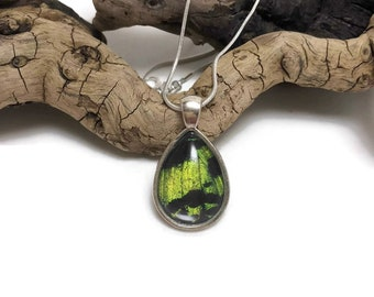 Real butterfly, Real Butterfly wing , butterfly jewelry, butterfly Necklace, Butterfly Pendant, glass pendant, glass jewelry, insect jewelry