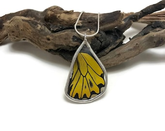 Real butterfly, real butterfly wing jewelry, handmade butterfly jewelry, real butterfly pendant,Real Butterfly Wing Necklace, butterfly