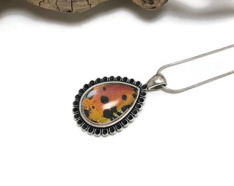 Real Butterfly wing jewelry, butterfly Wing Necklace, Sunset moth, Pendant, butterfly wing pendant, butterfly necklace, real butterfly