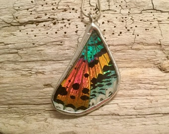 Real moth jewelry, real moth wing Necklace, sunset moth Pendant, butterfly wing, butterfly pendant, real butterfly jewelry