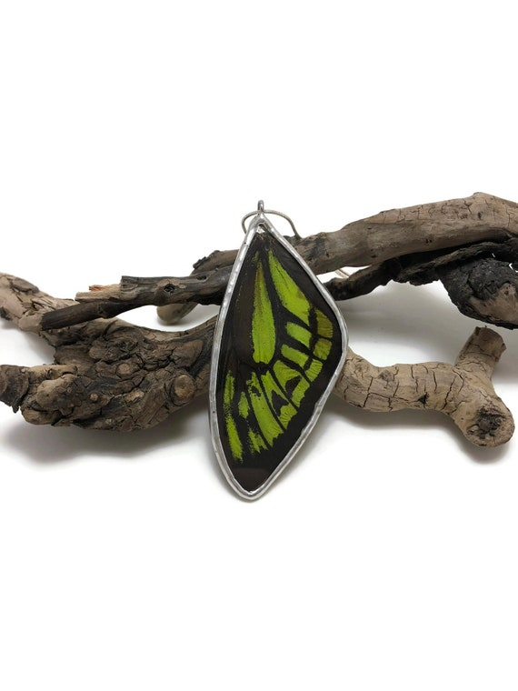 Real Butterfly pendant, real butterfly wing, butterfly jewelry, insect taxidermy, butterfly necklace, insect jewelry, insect Pendant, gifts