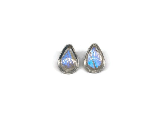 Real butterfly earrings, real butterfly wing, Minimalist jewelry, Butterfly jewelry, butterfly studs, Unique jewelry, butterfly Taxidermy