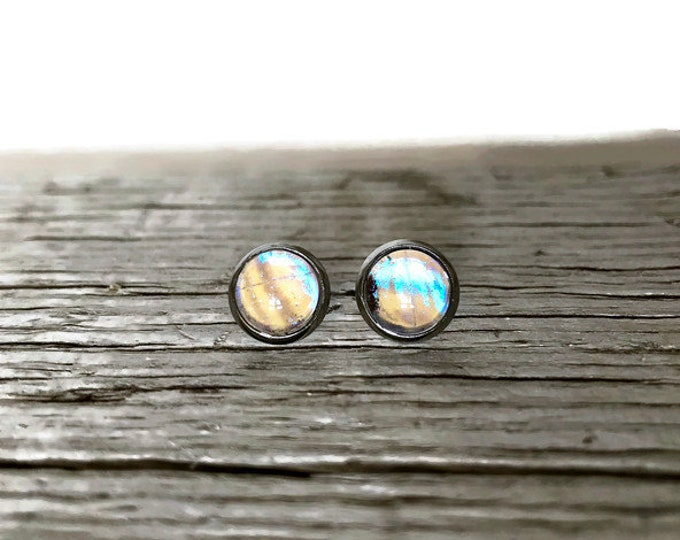 Featured listing image: Real butterfly earrings, butterfly lover gifts, real insect jewelry, butterfly wing taxidermy jewelry