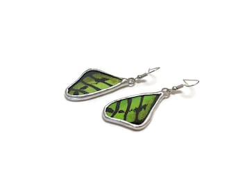 Butterfly jewelry, Green and black earrings, Real butterfly wing, insect earrings, gifts for mom, butterfly taxidermy best friend gifts