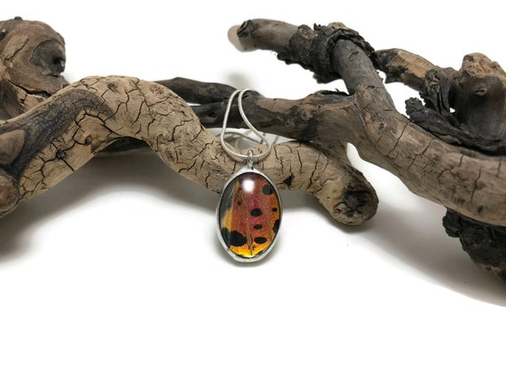 butterfly jewelry, unique jewelry, real butterfly wing, Unique gifts for her, jewelry for her, butterfly taxidermy, insect Necklace, gifts