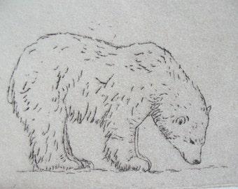 Polar Bear#2