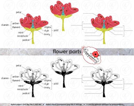 Blume Teile Wissenschaft Schema Clipart Set 300 dpi Schule | Etsy