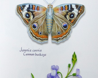Watercolor botanical giclee print, Common buckeye butterfly and blue toadflax wildflower