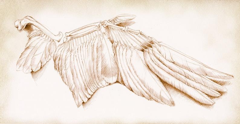 A4 Print 'Bones' image 0