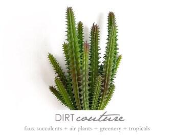 Euphorbia, pencil cactus, spiky, euphoria utopia, artificial plant, stick cactus, faux succulent