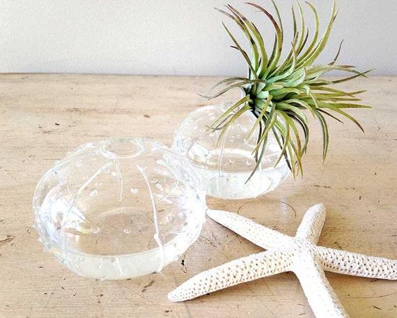 Sea Urchin Vase Small Bud Vase Fs31471 Flower Vase Clear Etsy