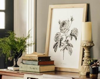Botanical Roses Framed Canvas Artwork - Farmhouse Decor - Black And White Wall Art