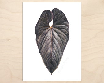 Anthurium moodeanum Print -- Botanical Watercolor Art