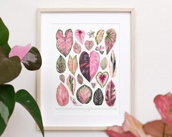 Pink Houseplant Varieties Print • Pink Houseplant species ID chart featuring 23 watercolor leaf paintings • Unframed fine art print