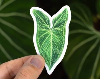 Syngonium 'Batik' Sticker