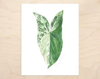 Syngonium 'Albo Variegata' Print -- Botanical Watercolor Art